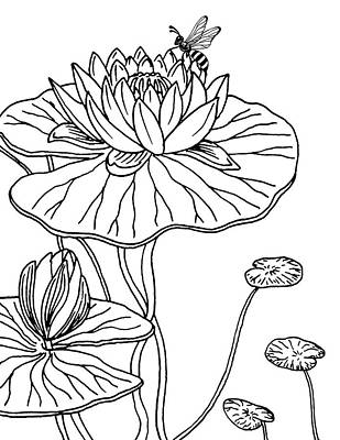 Florals Drawings - Waterlily And Bee Drawing  by Irina Sztukowski