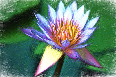 Digital Art - Waterlily Sketch by Terry Cork