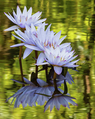 Photograph - Waterlily Dance by Dawn Currie