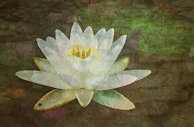 Photograph - Waterlily Dream by Joy Nichols