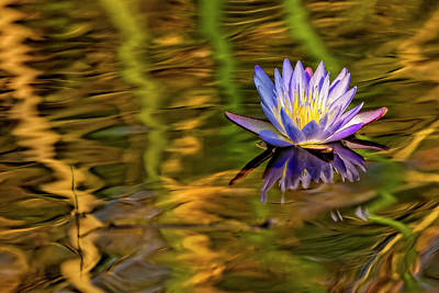 Photograph - Waterlily In Blue And Gold by Kay Brewer