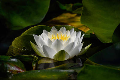 Photograph - Waterlily by Keith Boone