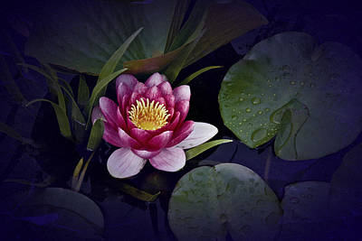 Photograph - Waterlily by Richard Cummings