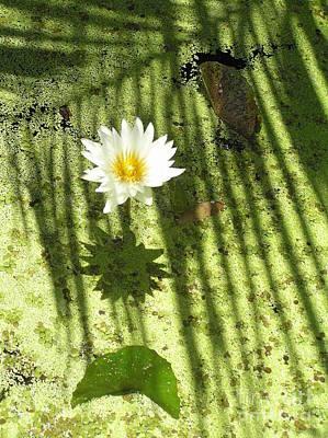 Oriental Photograph - Waterlily Zen by Irina Davis