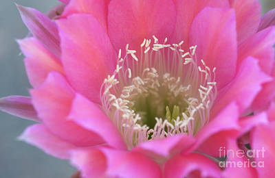 Photograph - Watermelon Blooms by Ruth Jolly