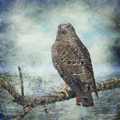 Buzzard Mixed Media - Water's Edge - Red Tailed Hawk by Martin Denault