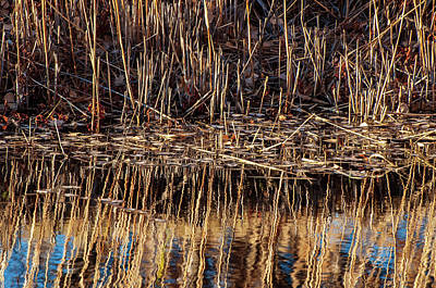 Photograph - Water's Edge Reflection by Britt Runyon