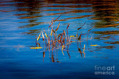 Photograph - Waterweeds by Roger Monahan