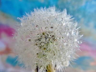 Photograph - Watery Dandelion by Barbara St Jean