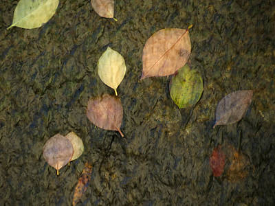 Photograph - Watery Leaves by Laurel Powell