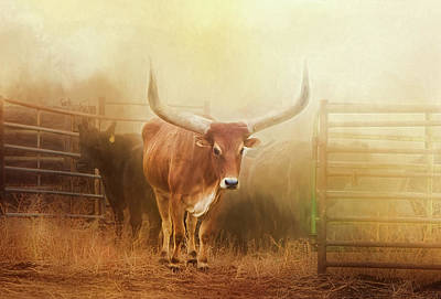Watusi In The Dust And Golden Light Art Print