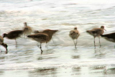 Photograph - Plundering Plover Series 3 by Angela Rath