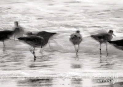 Photograph - Plundering Plover Series In Black And White 4 by Angela Rath