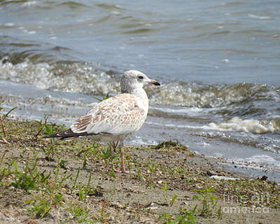 Photograph - Wave Watcher by Kathy M Krause