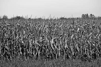 Photograph - Waverly Study 01 by Robert Meyers-Lussier