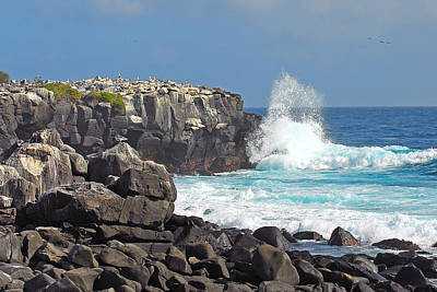 Photograph - Waves Crashing On Isla Espanola by Alan Lenk