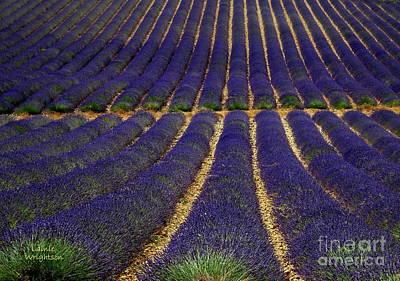 Waves Of Lavender Art Print