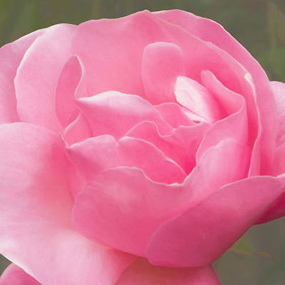 Photograph - Waves Of Pink by Bonnie Follett