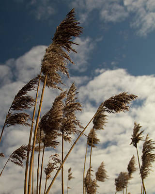 Photograph - Waving In The Breeze by Leah Palmer