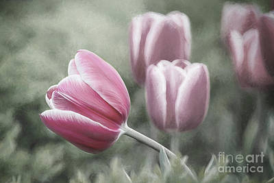 Digital Art - Waving Pink Tulip Desaturated by Sharon McConnell