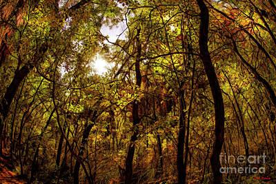 Photograph - Wavy Trunks by Blake Richards