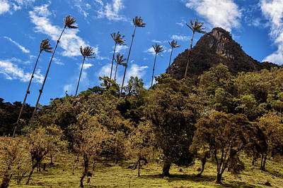 Tree Photograph - Wax Palms In Cocora Valley, Colombia by Michael Evans