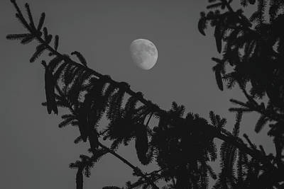 Photograph - Waxing Gibbous Through The Evergreens by Andrew Pacheco