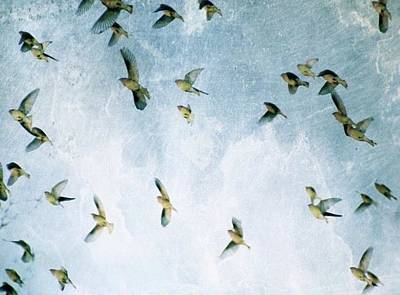Photograph - Bird Dreams by Sue McGlothlin