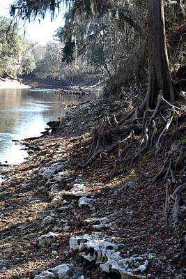 Photograph - Way Down Upon The Suwanee River by rd Erickson