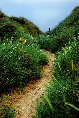 Way Through The Dunes Art Print