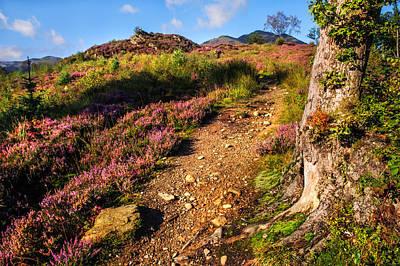 Photograph - Way Up. Trossachs National Park by Jenny Rainbow