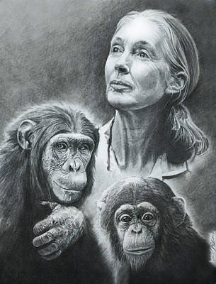 Chimpanzee Drawing - We Are Family Jane Goodall by Reed Palmer