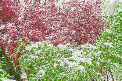 Photograph - We Get Most Of Our Snow In March, April, And May, Not In The Dead Of Winter.  by Bijan Pirnia