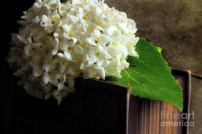 Viburnum Photograph - We Have Something Special by Michael Eingle