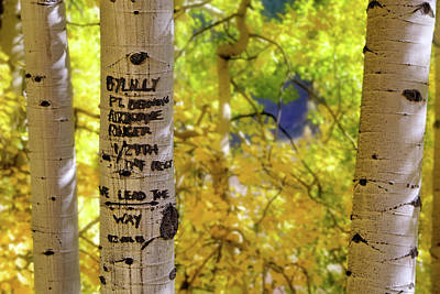 Photograph - We Lead The Way - Aspens - Colorado - Airborne Ranger by Jason Politte