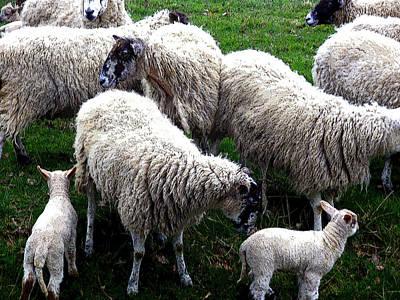 We Like Sheep Art Print by Mindy Newman