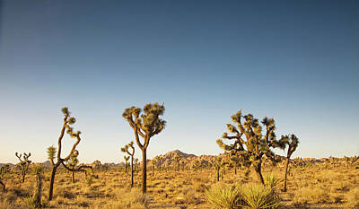 Joshua Tree Np Photograph - We Love This Sunset by Kunal Mehra