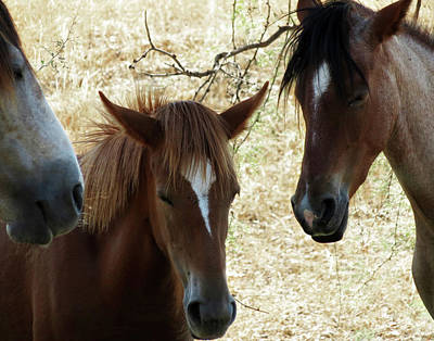 Photograph - We Three Horses by Laurel Powell