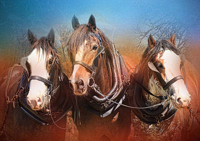 Shire Horse Digital Art - We Three by Trudi Simmonds