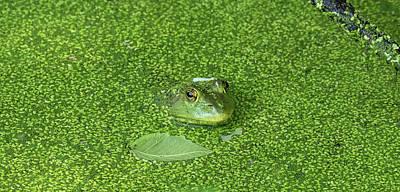 Photograph - Wearin' Of The Green by Bill Jordan