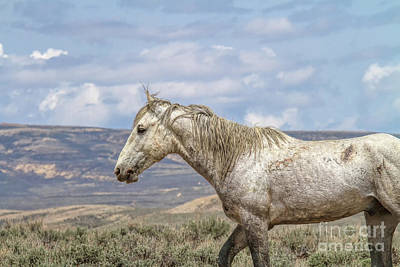 Photograph - Weary Warrior by Jim Garrison
