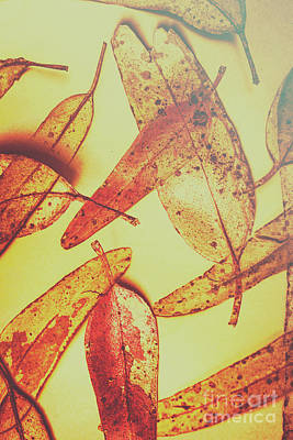 Botanical Photograph - Weathered Autumn Leaves by Jorgo Photography - Wall Art Gallery