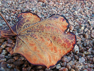 Photograph - Weathered Leaf by Kelly Holm