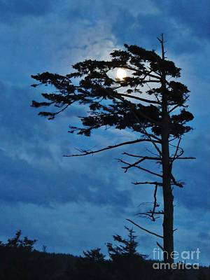 Weathered Moon Tree Art Print by Michele Penner