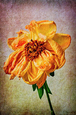 Photograph - Weathered Peony by Garry Gay