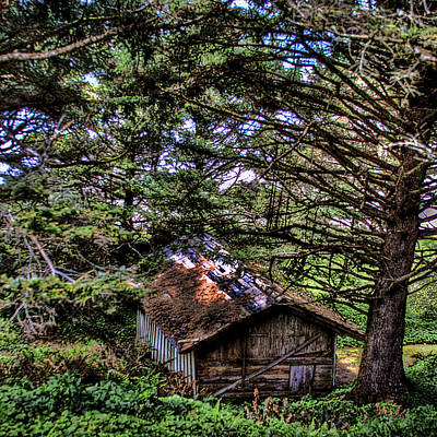 Weathered Shed Art Print by David Patterson