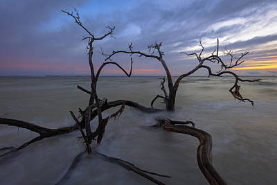 Sanibel Island Photograph - Weathered Souls by Mike Lang