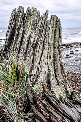 Photograph - Weathered Stump II by Roxy Hurtubise