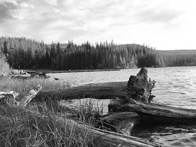 Photograph - Weathered Timber by Jennifer Lake