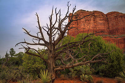 Weathered Tree At Courthouse Butte Art Print